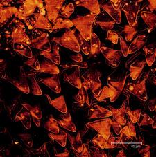 Tricomes of Cardinal flower (Lobelia cardinalis)