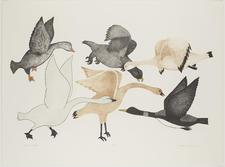 Birds of Summer