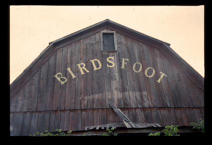 Birdsfoot Barn